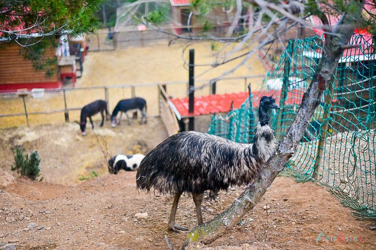 GranjaAventuraPark-granja-animales-planesconninos-salirenfamilia-FamiliasActivas-ociofamiliar-11
