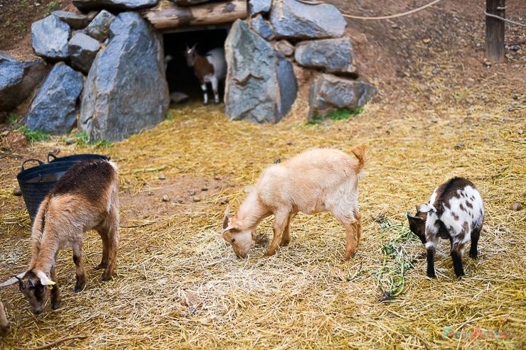 GranjaAventuraPark-granja-animales-planesconninos-salirenfamilia-FamiliasActivas-ociofamiliar-16