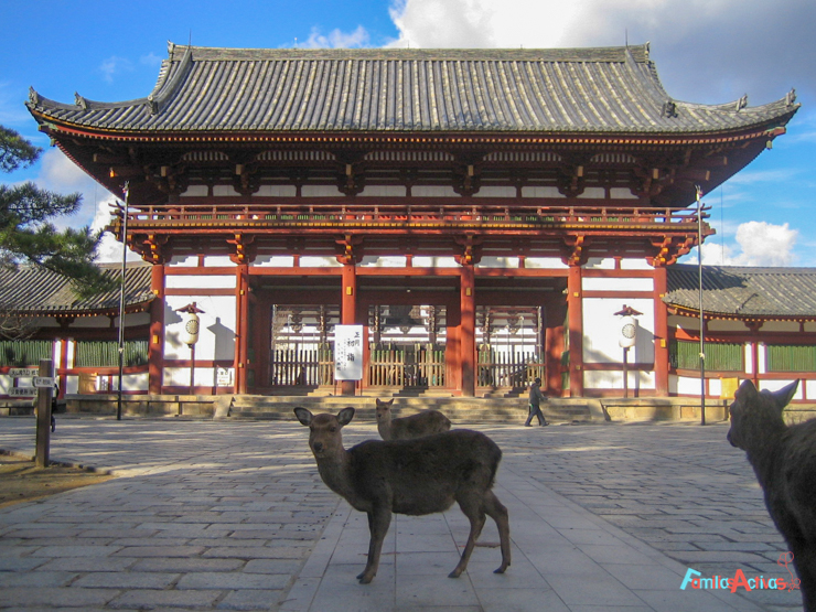viaje-a-japon-en-familia-24