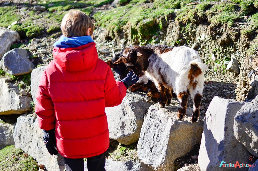 Camping Els Roures_Camprodon_viajar en familia_Familias Activas-41
