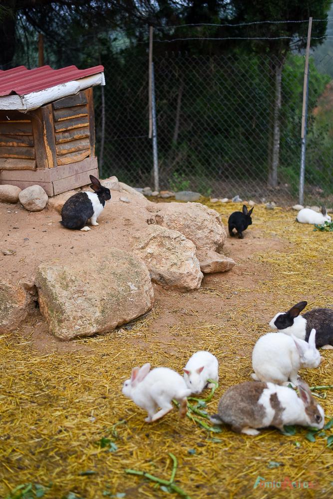 GranjaAventuraPark-granja-animales-planesconninos-salirenfamilia-FamiliasActivas-ociofamiliar-17