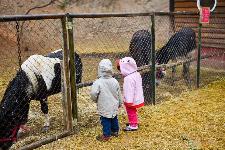 GranjaAventuraPark-granja-animales-planesconninos-salirenfamilia-FamiliasActivas-ociofamiliar-19
