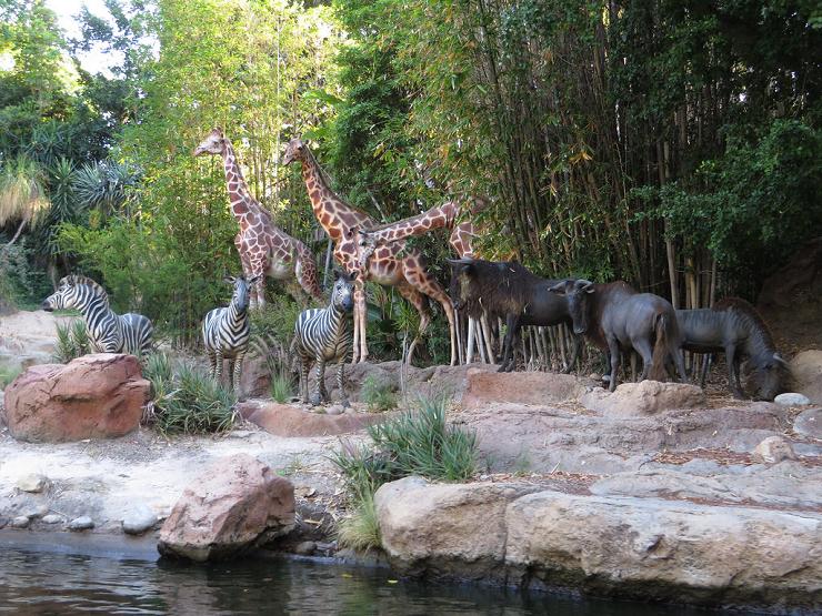 """""""Jungle Cruise"""" es una de las primeras atracciones que diseñó el propio Disney."""