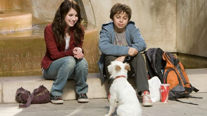 netflix dia internacional mascotas sin hogar