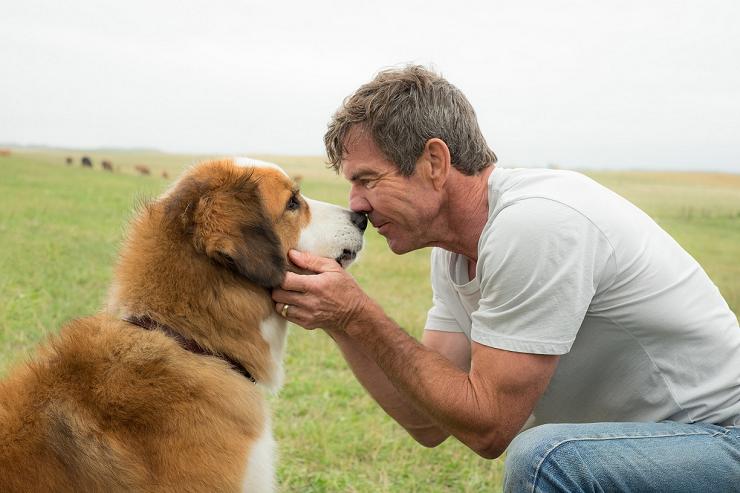 El alma de tu perro te acompañará siempre en la vida.