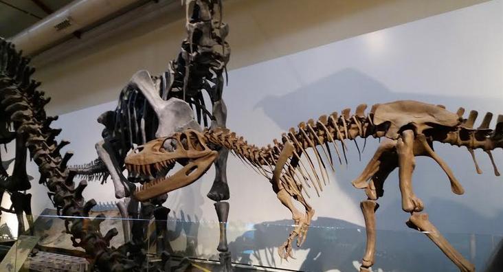 museomadrid